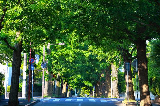 田園調布駅・日吉駅近くの風景写真.jpg